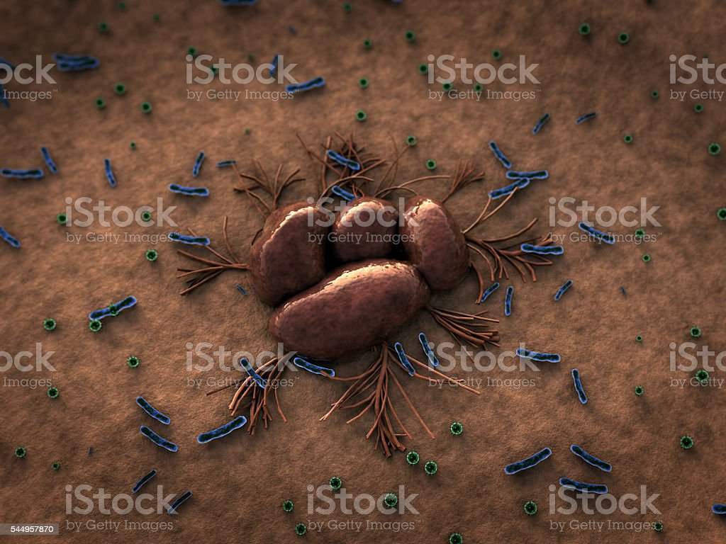 fungus and bacteria stock photo