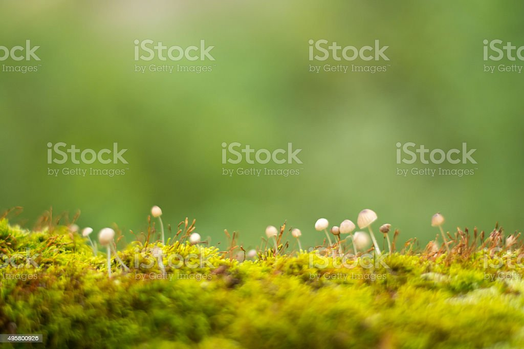fungus in the moss stock photo