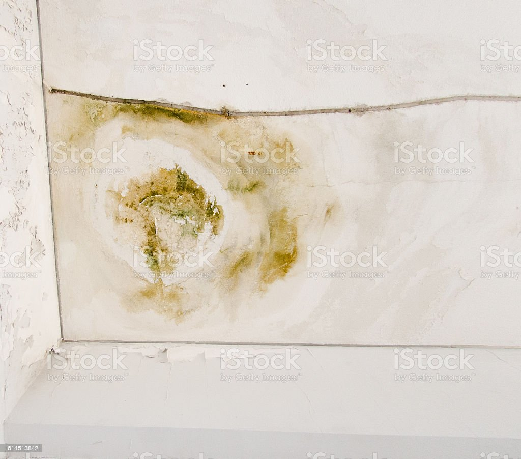 Leaky Roof fungus mold leaky roof stock photo 614513842 | istock