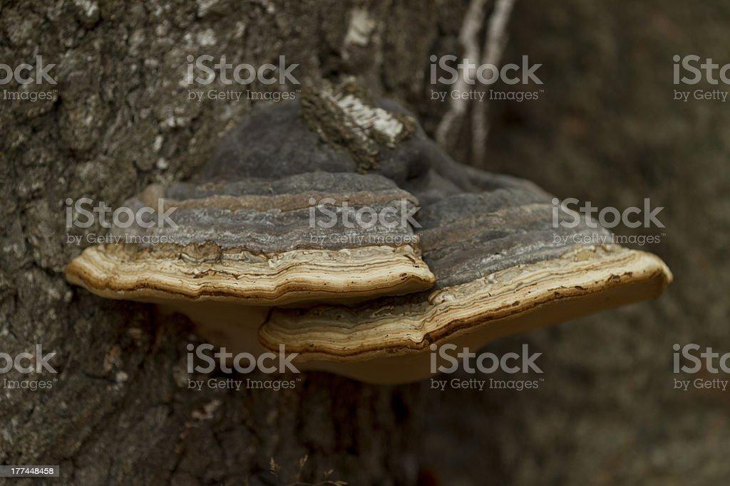 Fungus parasite stock photo