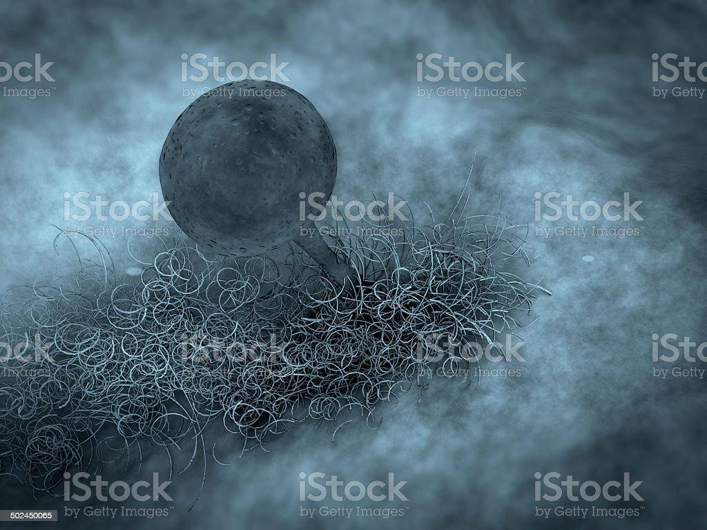 fungus stock photo
