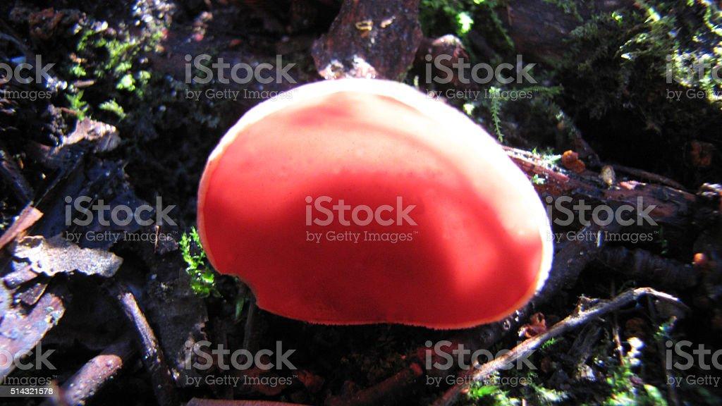 fungus stock photo