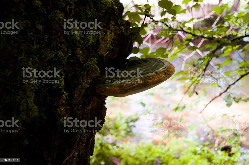 Fungus tree stock photo