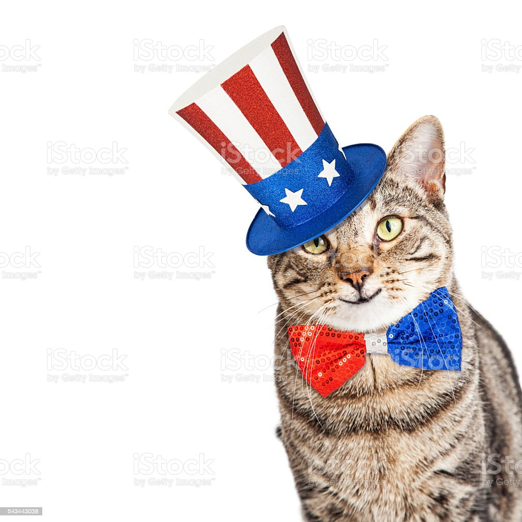 Funny American Patriotic Cat stock photo