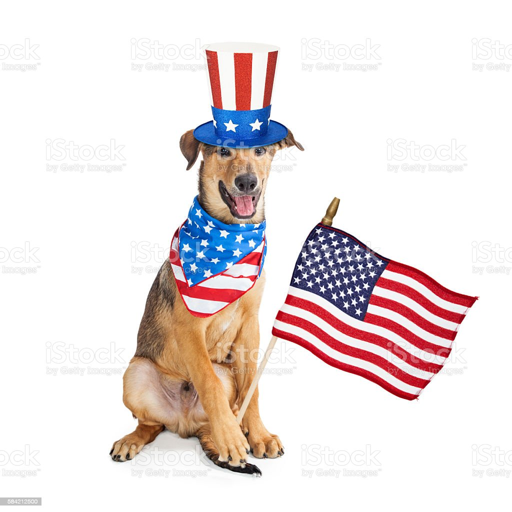 Funny American Patriotic Dog With Flag stock photo