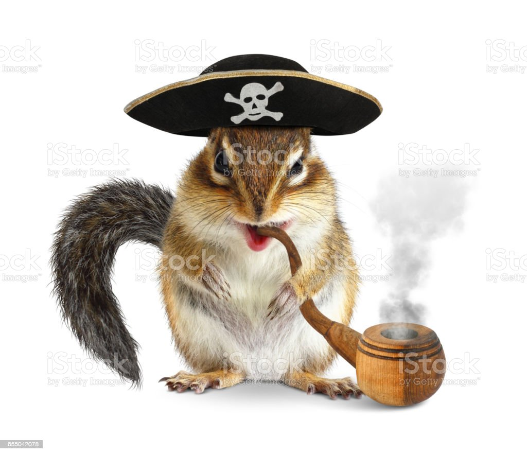 Funny animal pirate, chipmunk with pipe and filibuster hat on white stock photo
