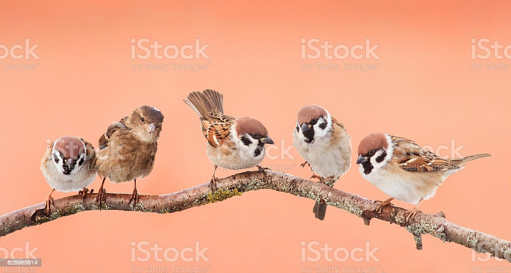 funny birds sitting on a branch stock photo
