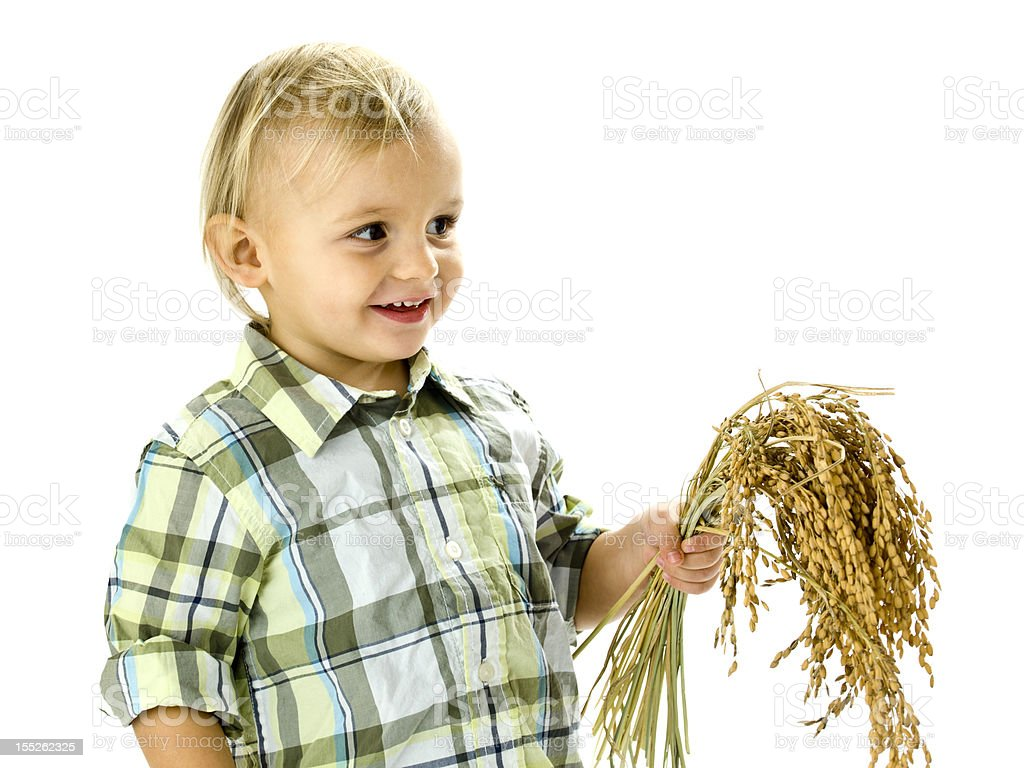 funny boy with rice plants in the hands stock photo