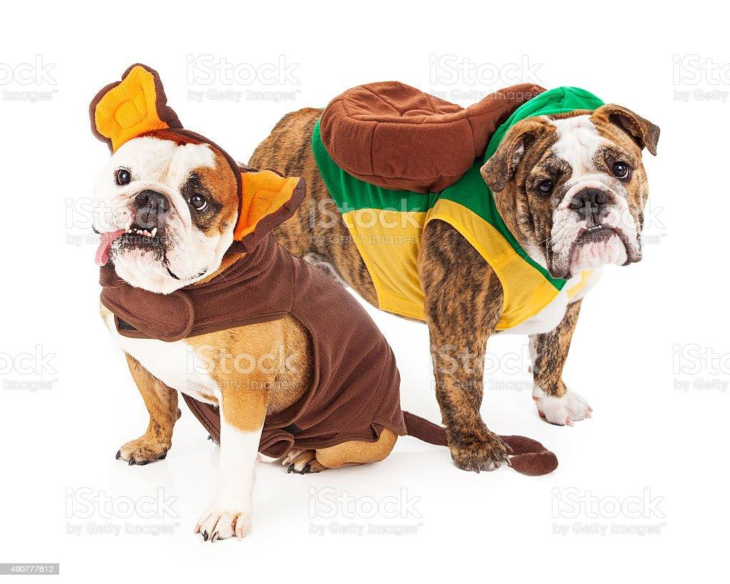 Funny Bulldogs in Halloween Costumes stock photo
