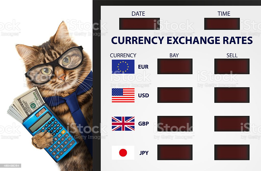 Funny cat, currency exchange. stock photo
