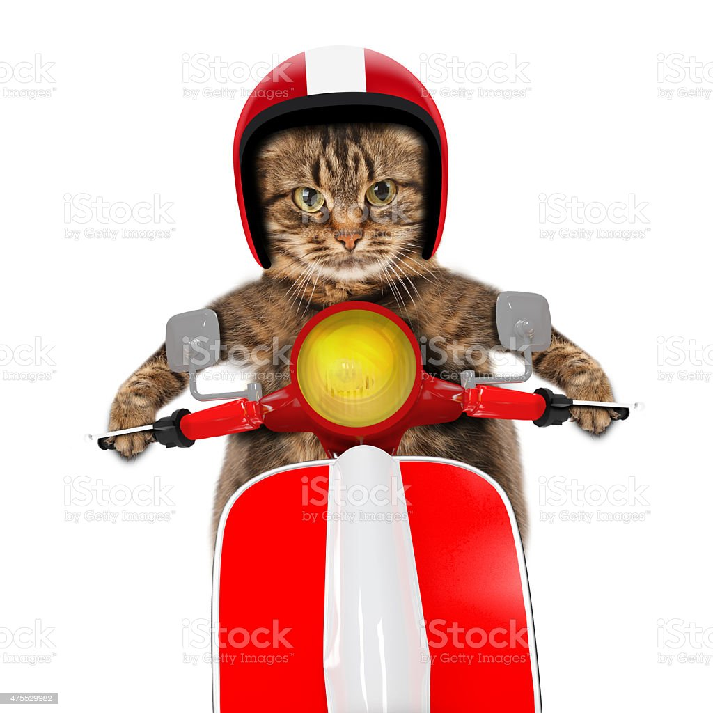 funny cat driving a moped stock photo
