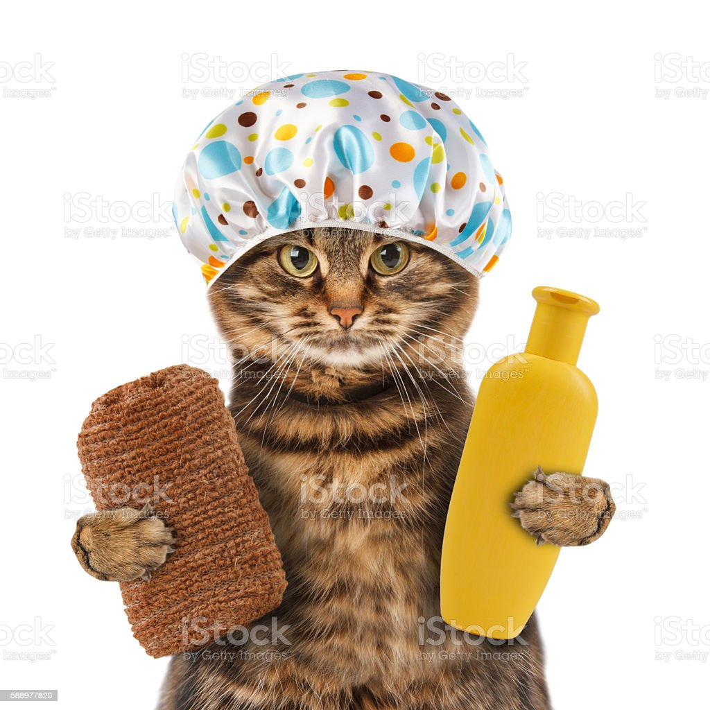 Funny cat going to washing. stock photo
