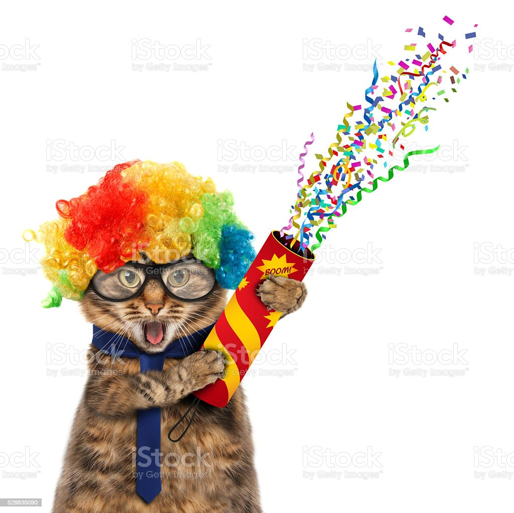 Funny cat in costume clown. stock photo
