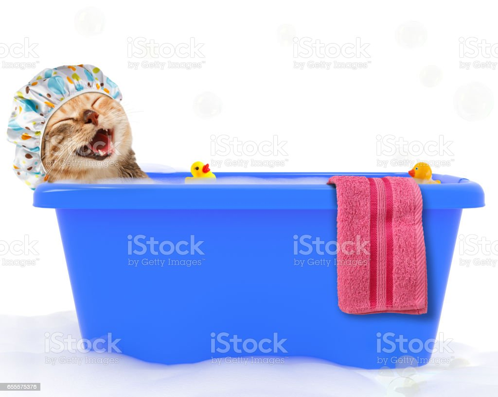 Funny cat is taking a bath in a colorful bathtub with toy duck. stock photo