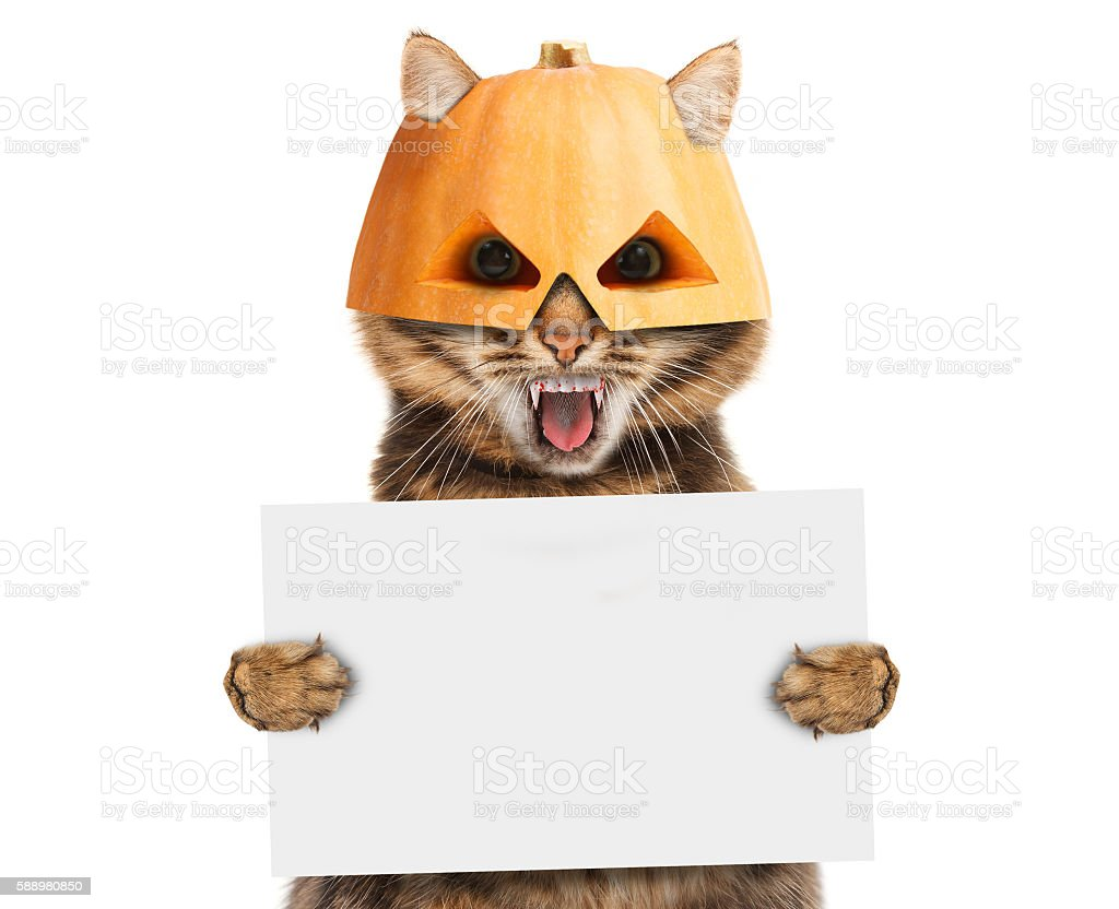 Funny cat is wearing a halloween mask stock photo