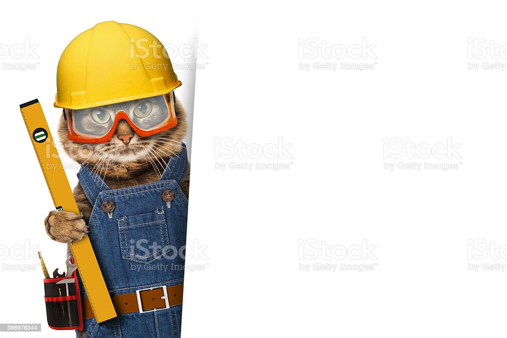 Funny cat is wearing a suit of builder. stock photo