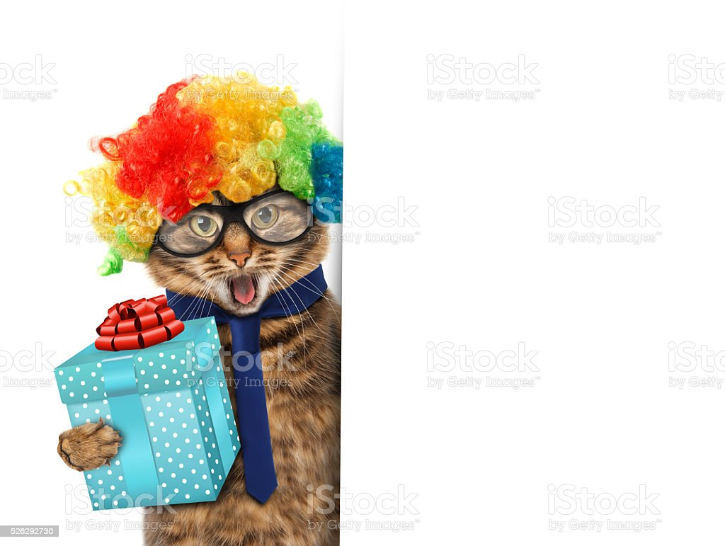 Funny cat is wearing a suit of clown stock photo