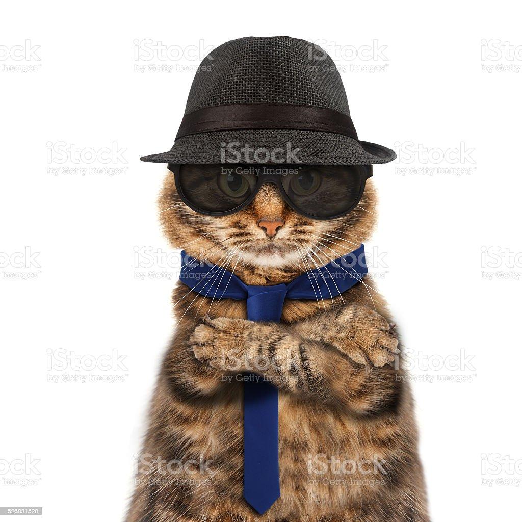 Funny cat - mafia boss stock photo