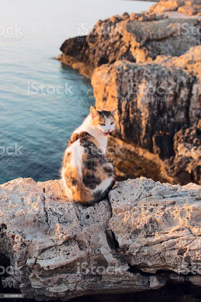 Funny cat onthe sea coast stock photo