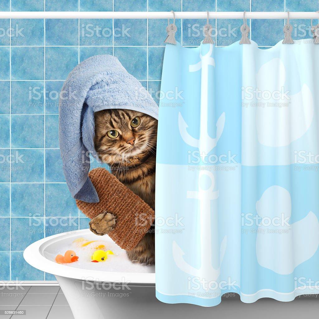 Funny cat taking a bath. stock photo