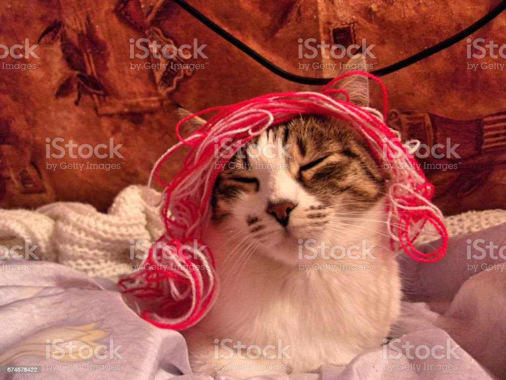 Funny cat with a colorful wig stock photo