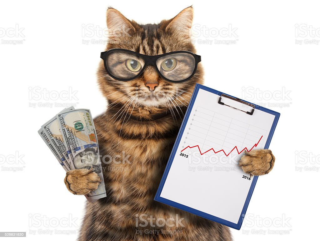 Funny cat with a folder for presentations. stock photo
