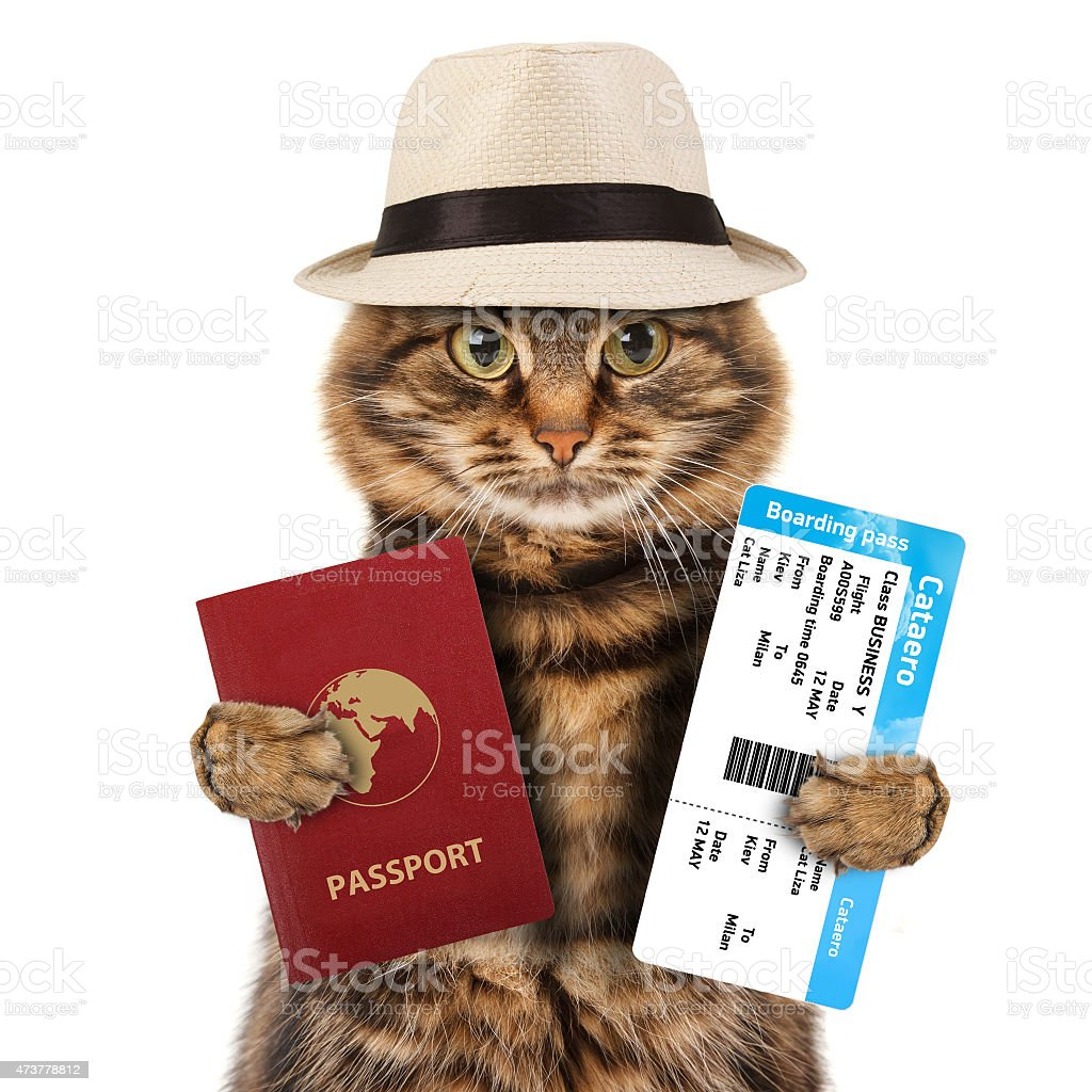 funny cat with passport and airline ticket stock photo