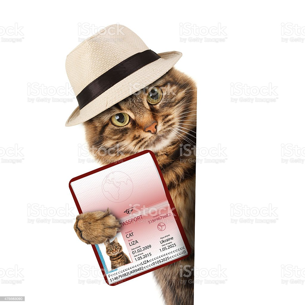 funny cat with passport stock photo