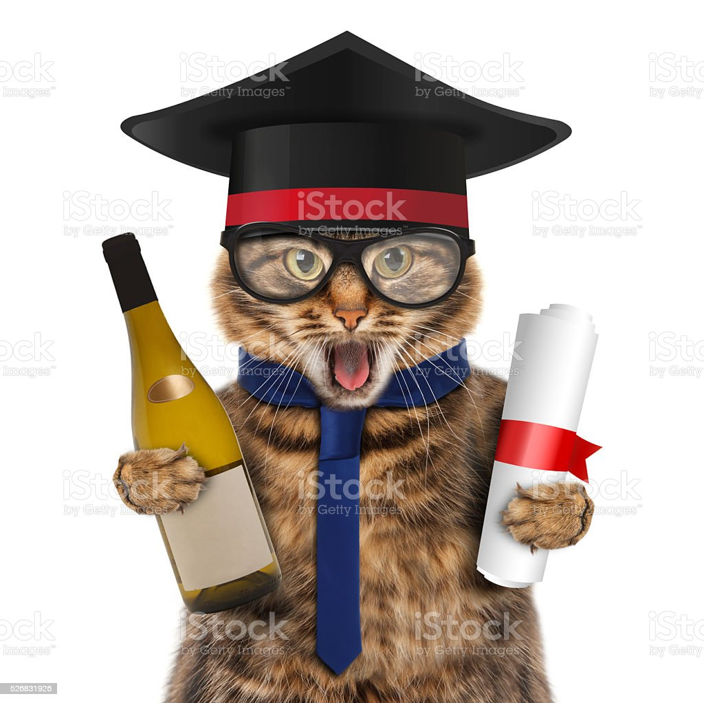 Funny cat with wine and diploma. stock photo