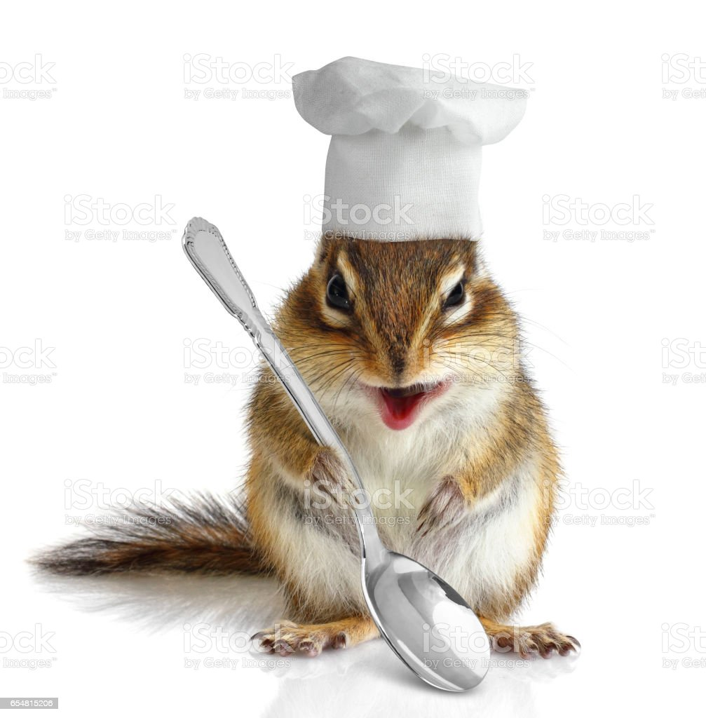 Funny chef chipmunk on white stock photo