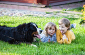 funny children lying on the grass with bernese mountain dog