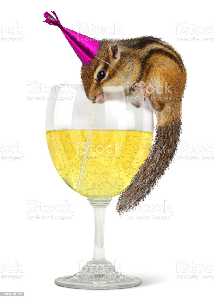 Funny chipmunk drinking champagne, celebrate concept. stock photo