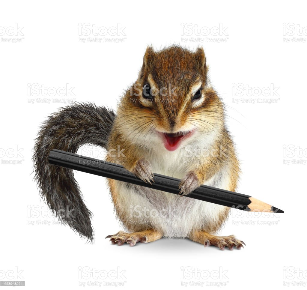Funny chipmunk hold pencil, on white stock photo