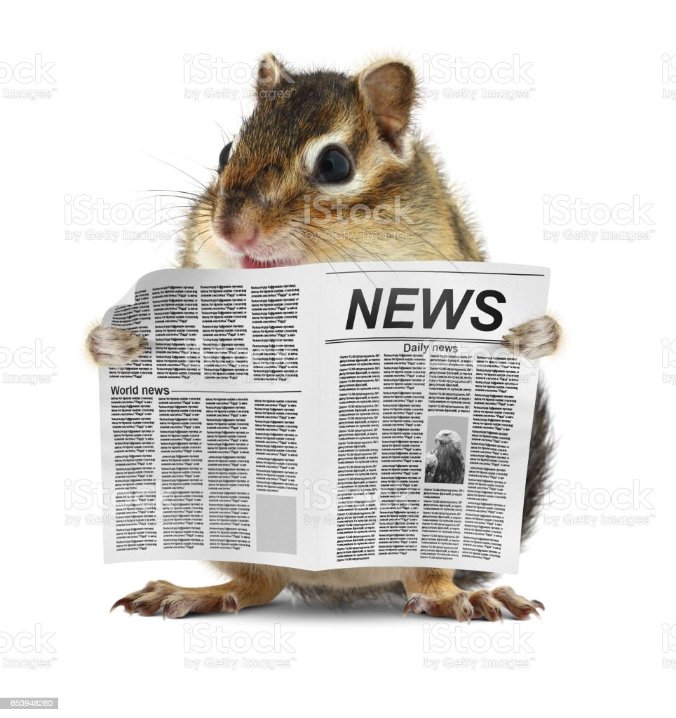 Funny chipmunk read newspaper, news concept stock photo