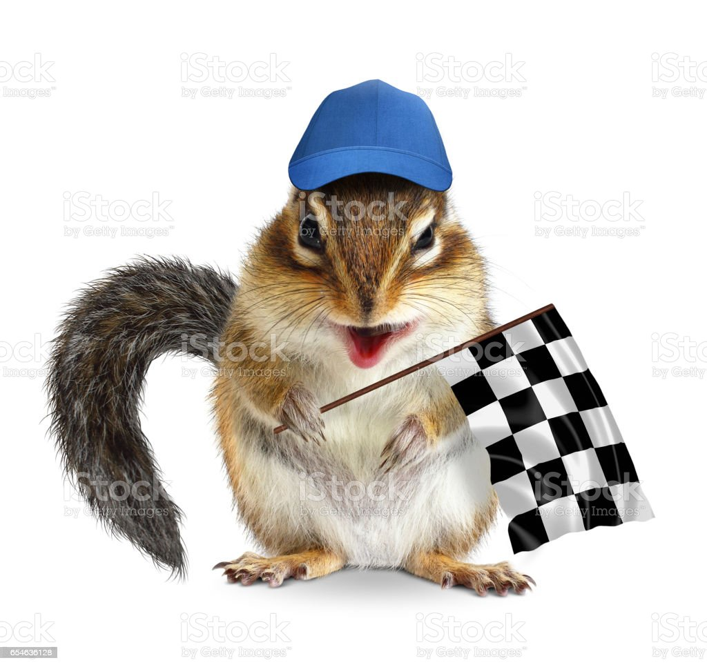 Funny chipmunk with racing flag on white stock photo