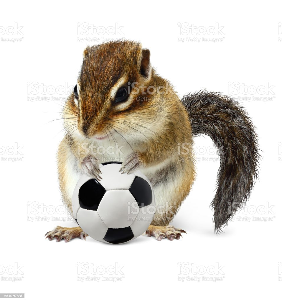 Funny chipmunk with soccer ball on white stock photo