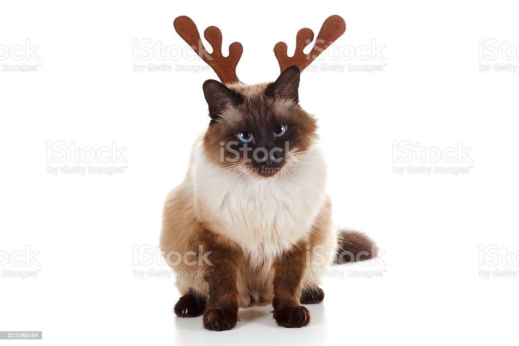 Funny Christmas Rudolph reindeer pet cat stock photo