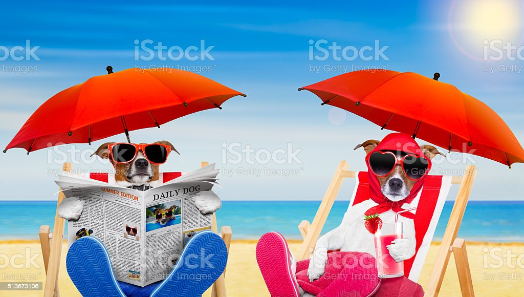 funny couple of dogs in love at the beach stock photo