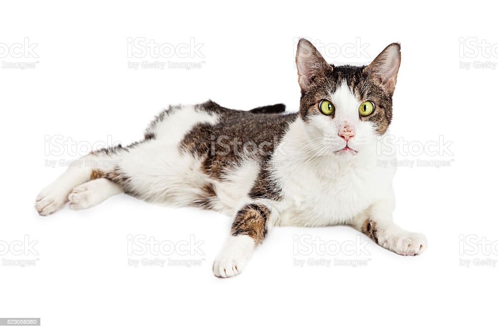 Funny Cross-Eyed Blind Cat stock photo