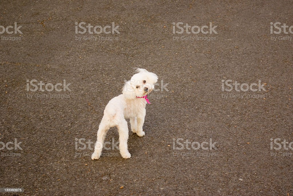 funny cute puppy looking at camera stock photo