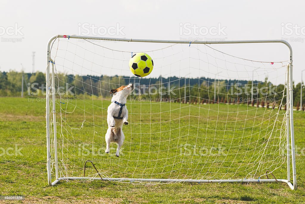 Funny dog catching a ball stock photo