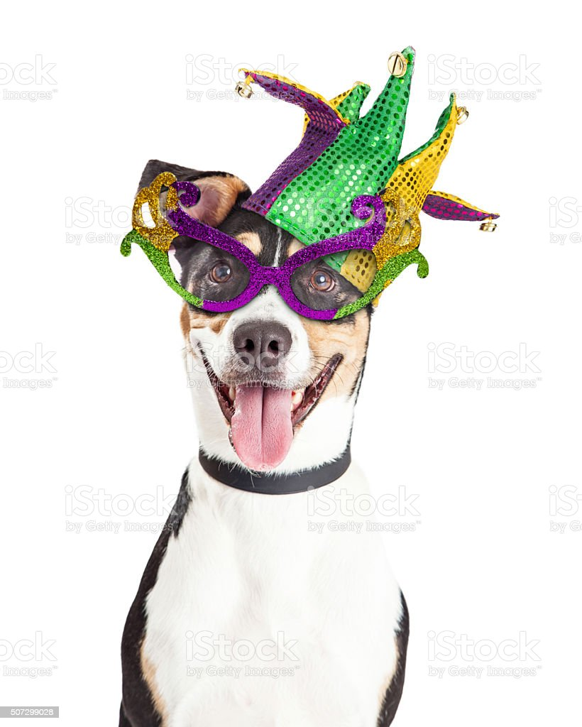 Funny Dog Dressed For Mardi Gras stock photo