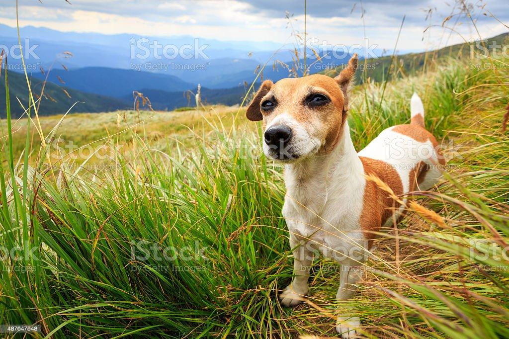 Funny dog face stock photo