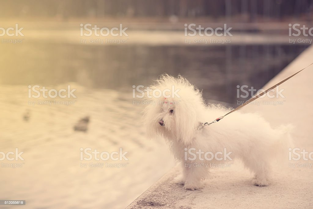 Funny dog in the park stock photo