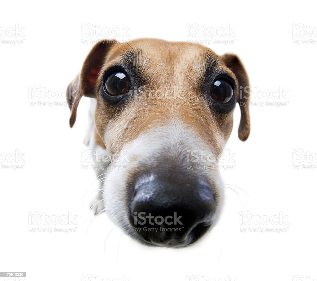 Funny dog nose stock photo