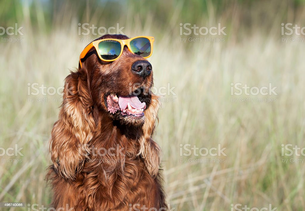 Funny dog stock photo