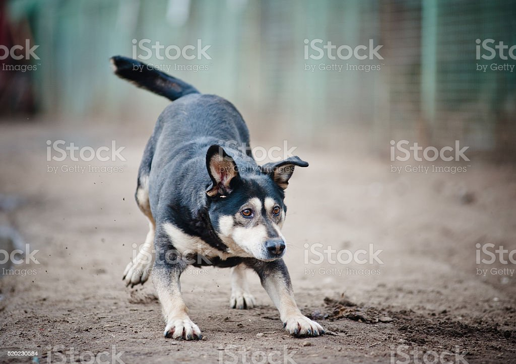 funny dog playing stock photo