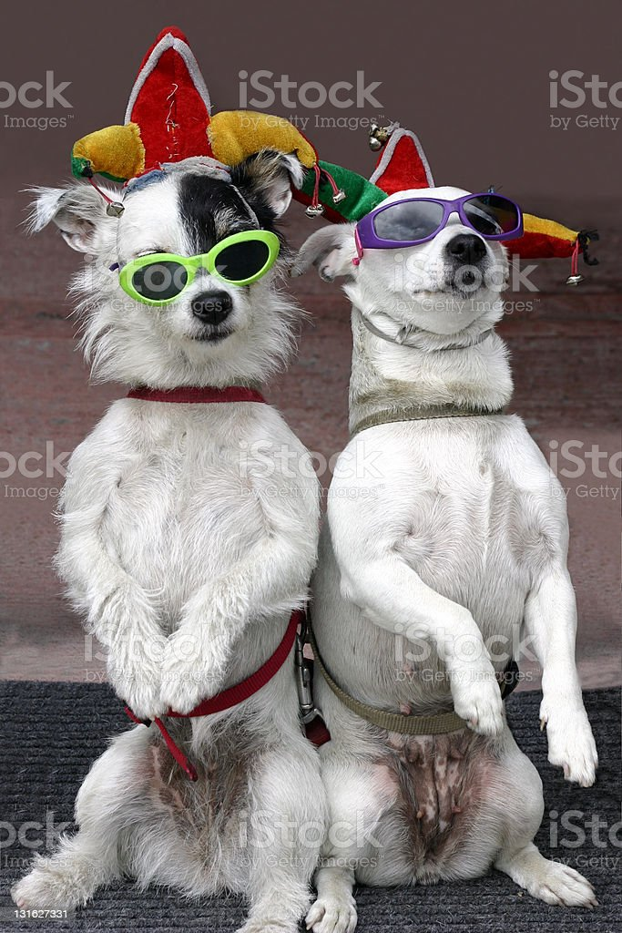 Funny Dogs stock photo