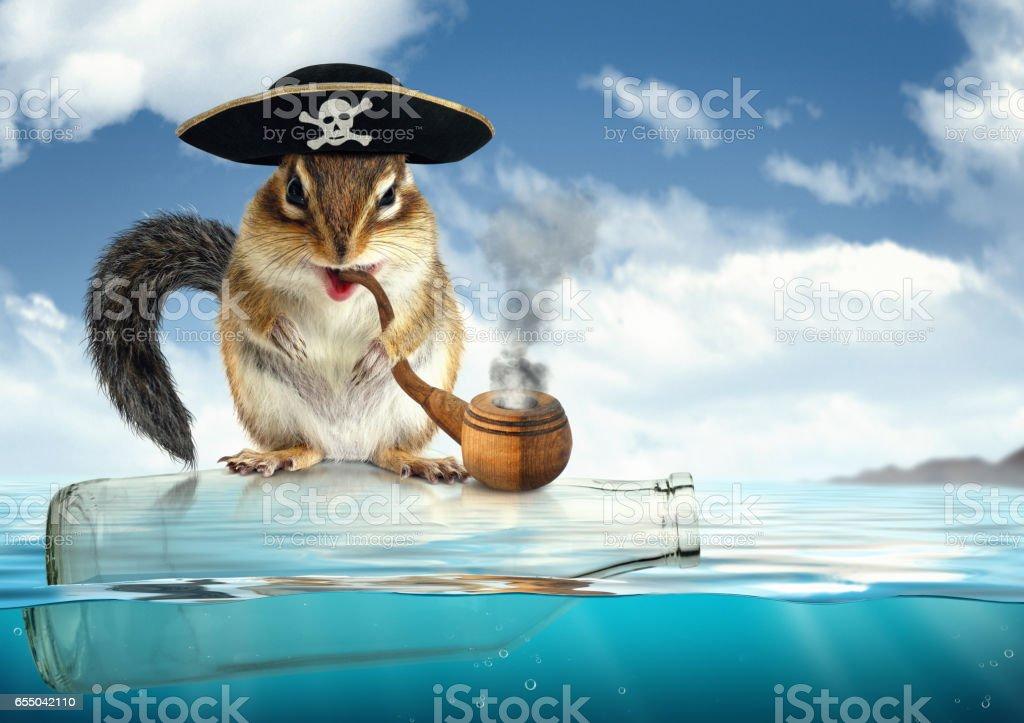 Funny drifting animal pirate, chipmunk filibuster stock photo