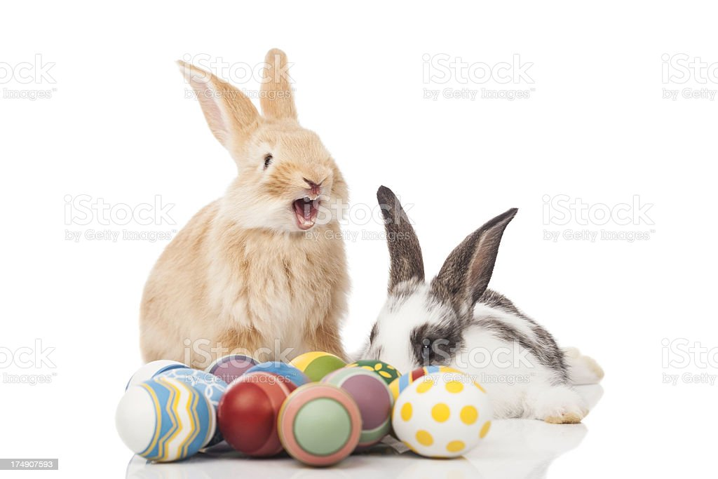 Funny Easter bunny stock photo